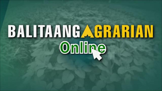 Balitaang Agrarian Online 7.