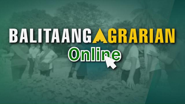 Balitaang Agrarian Online 11.